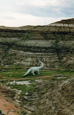 A Diplodocus