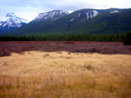 A meadow near Banff