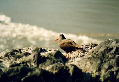 Birds are everywhere near Long Beach