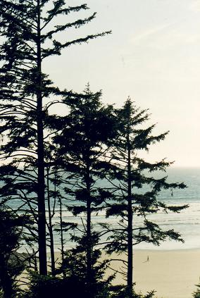 A view on the beach from a hill