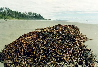 Sea weeds on the beach