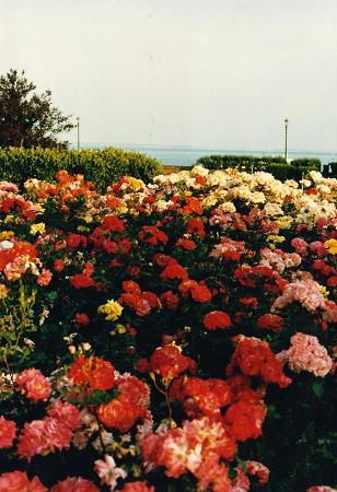 The beautiful flowers of Southend-on-Sea resort near London