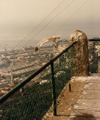 View of the port of Gibraltar