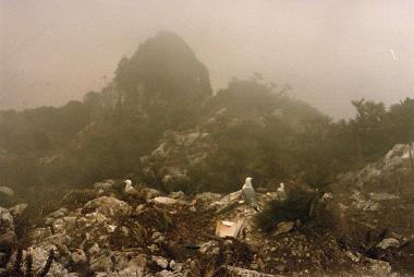 Fog on the rock of Gibraltar