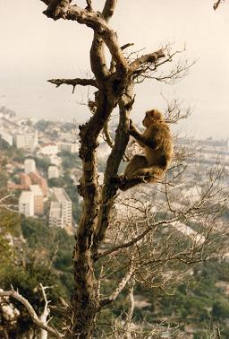 Monkey hanging tight on a tree