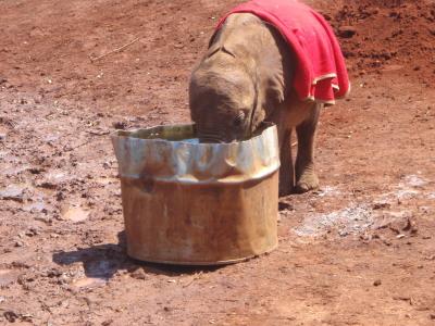 Orphan drinking water, Shukuru?? Three months old