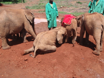 The elephants like to roll or cover themselves with cool dirt