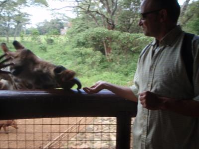 feeding the Giraffe by hand