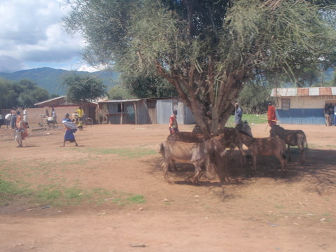 Donkeys in a kenyan village