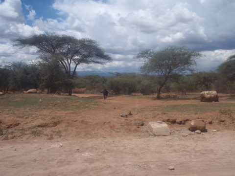 Camels running around in Kenya