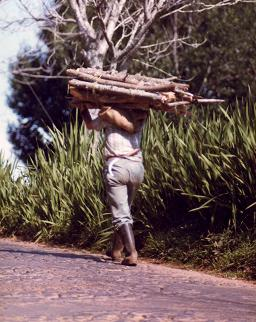 Man carrying wood in Madeira